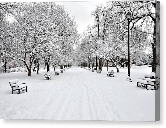 Park Benches Canvas Print - Snow Covered Benches And Trees In Washington Park by Shobeir Ansari