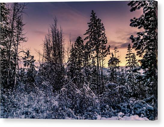 Snow Covered Pine Trees Canvas Print