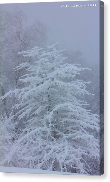 Snow Covered Tree In The Fog Canvas Print