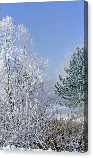 2a357 Snow Covered Trees At Alum Creek State Park Canvas Print