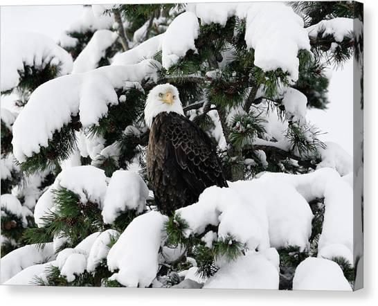 Snow Eagle Canvas Print