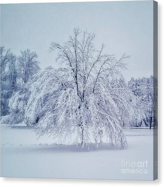 Snow Encrusted Tree Canvas Print