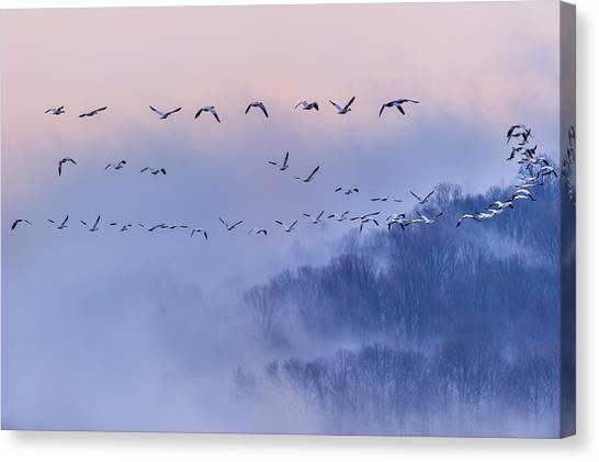 Geese Canvas Print - Snow Geese by Austin Li