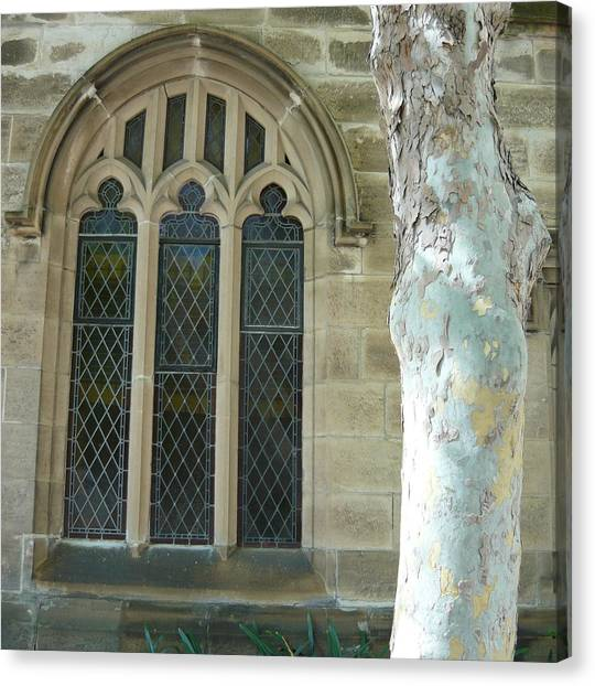 Snow Gum And St Andrews Cathedral Canvas Print by Adrianne Wood
