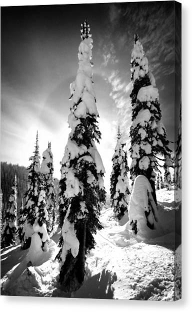 Snow Laden Tree Canvas Print
