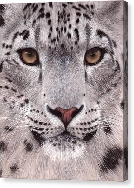 Snow Leopard Face Canvas Print