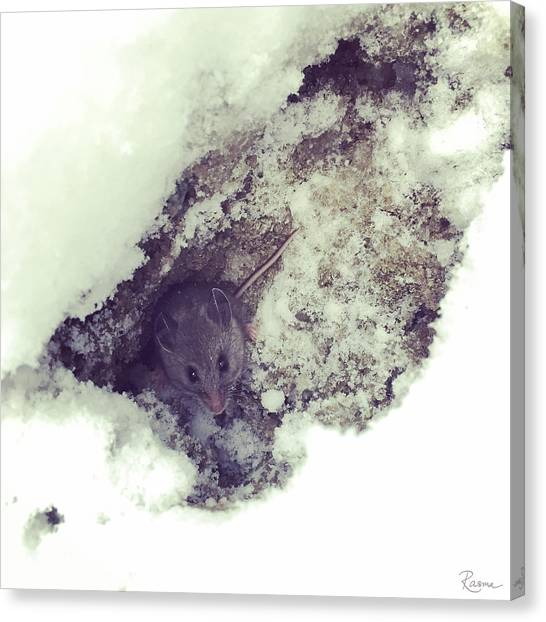 Snow Mouse Canvas Print