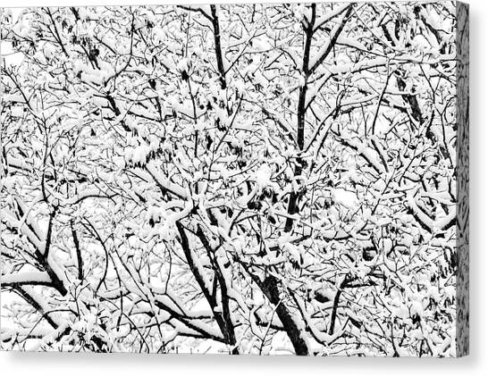 Canvas Print featuring the photograph Snow On Branches by Lars Lentz