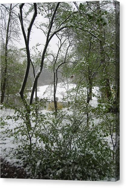 Snow On Spring Buds Canvas Print by Garth Glazier