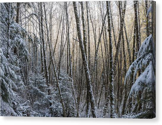 Snow On The Alders Canvas Print