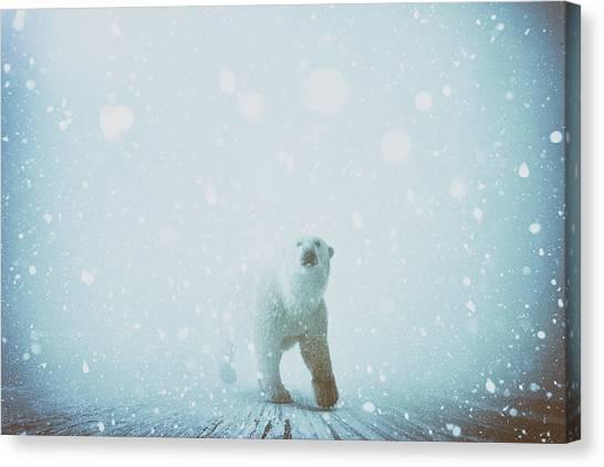 Polar Bear Canvas Print - Snow Patrol by Katherine Smit