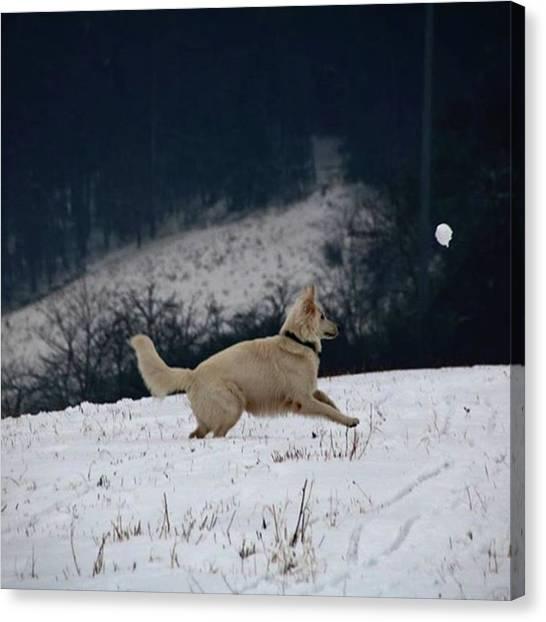 Snowball Canvas Print - 🌇#snow #photographer by Max Girschik