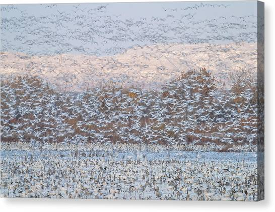 Geese Canvas Print - Snow Storm by Nick Kalathas