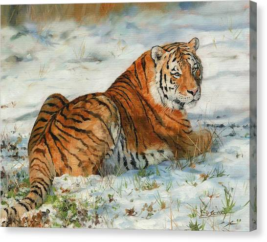 Siberian Canvas Print - Snow Tiger by David Stribbling