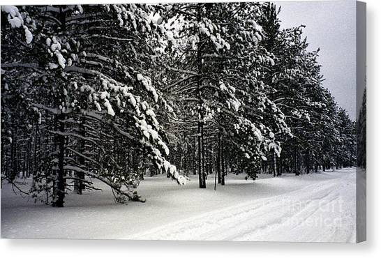 Snow Trail Canvas Print by Cathy Weaver