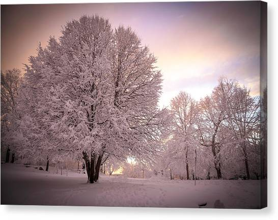 Snow Tree At Dusk Canvas Print