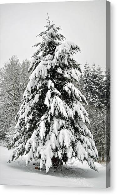Snow Tree Canvas Print by Matthew Adair