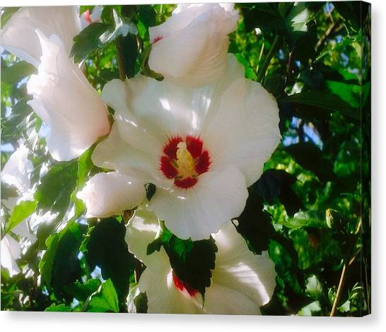 Border Wall Canvas Print - Snow White And The Hibiscus by Debra Lynch