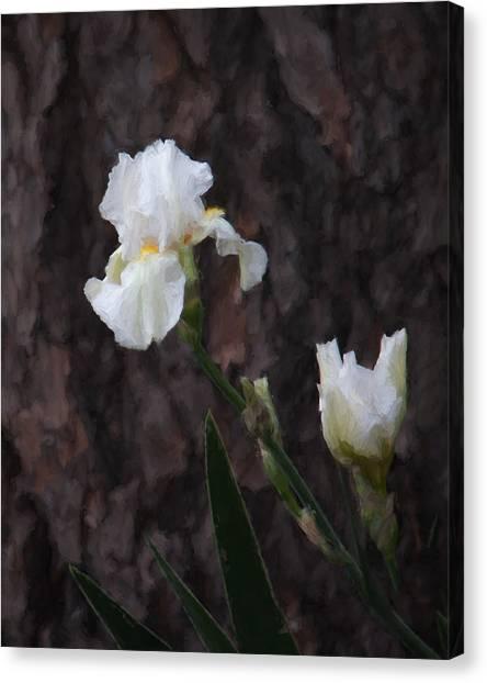 Snow White Iris On Pine Canvas Print