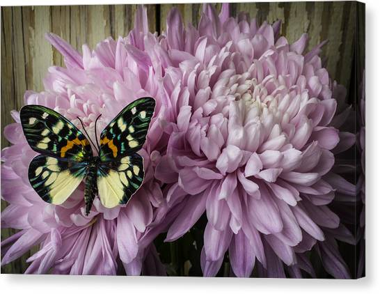 Snowball Canvas Print - Snowball Mum With Butterfly by Garry Gay