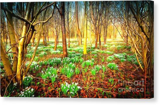 Snowdrops In The Woods Canvas Print