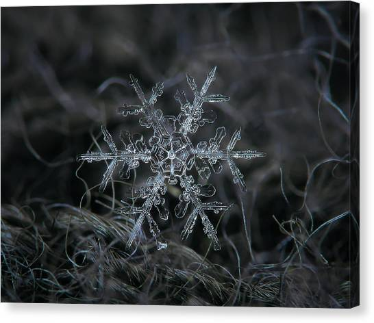 Ice Canvas Print - Snowflake 2 Of 19 March 2013 by Alexey Kljatov