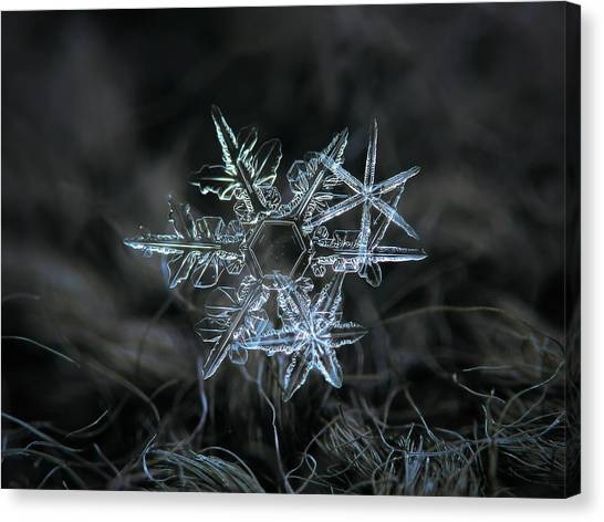 Canvas Print featuring the photograph Snowflake Of 19 March 2013 by Alexey Kljatov