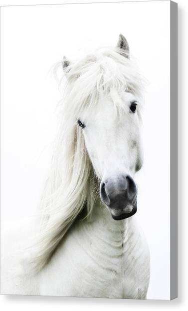 Animal Canvas Print - Snowhite by Gigja Einarsdottir
