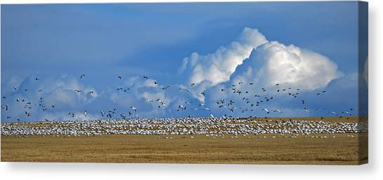 Snows And Storms Canvas Print