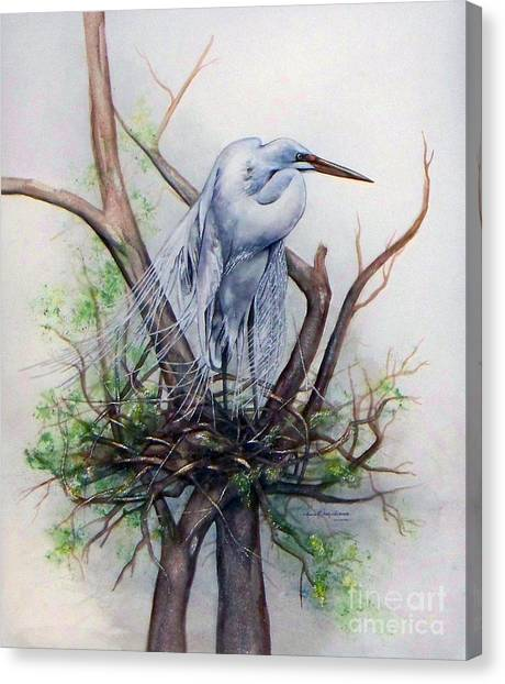 Snowy Egret On Nest Canvas Print