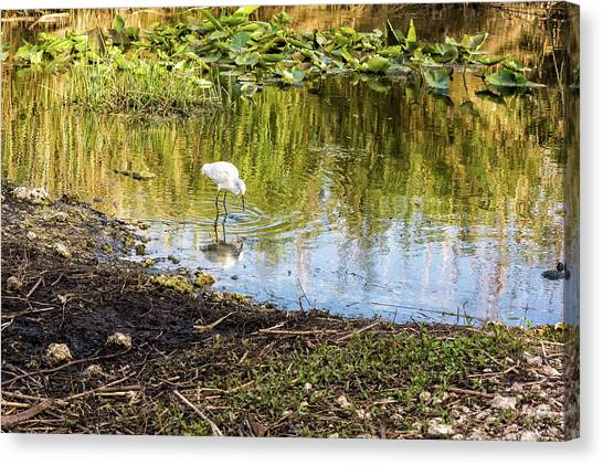 Snowy Egret Reflections Canvas Print
