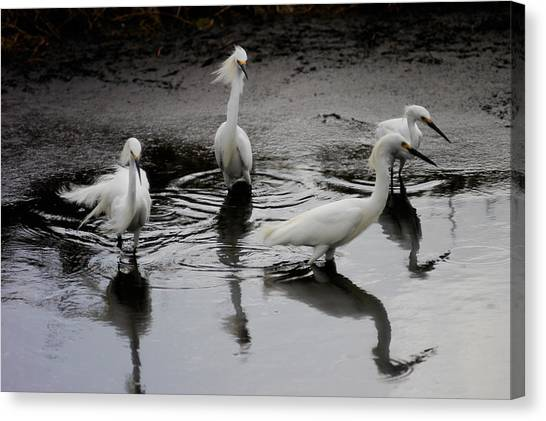 Snowy Egrets I Canvas Print by Jane Melgaard