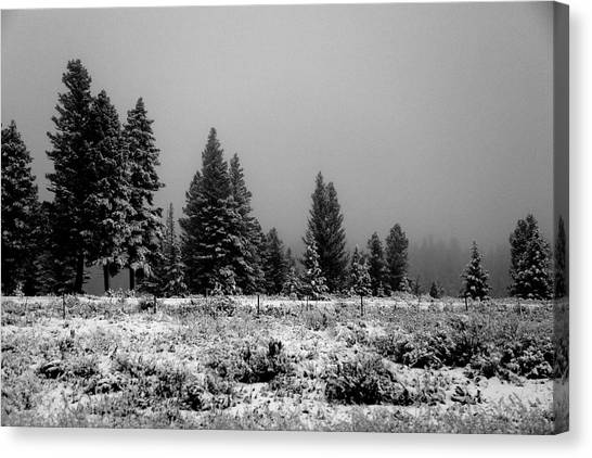 Fine Art Canvas Print - Snowy by Fine Art