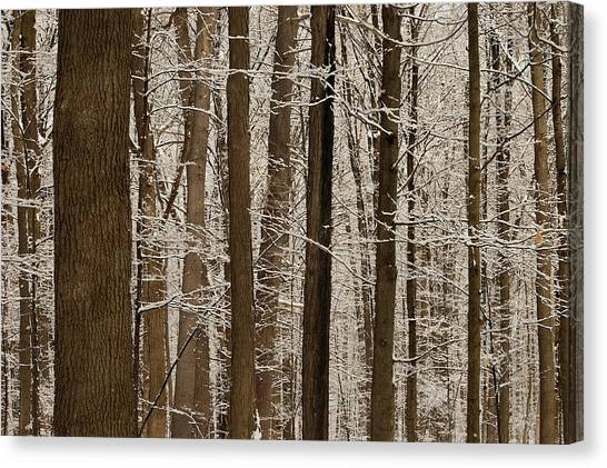 Snowy Forest Elevation Canvas Print