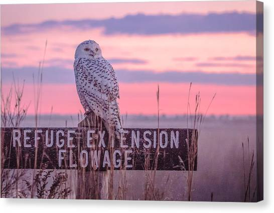 Snowy In The Meadow Canvas Print