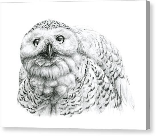 Snowy Owl -bubo Scandiacus Canvas Print by Svetlana Ledneva-Schukina