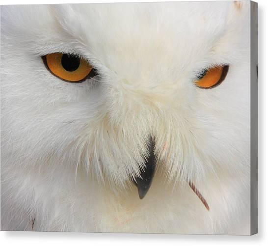 Snowy Owl Close Canvas Print by Larry Federman