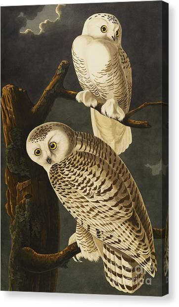 Tree Canvas Print - Snowy Owl by John James Audubon