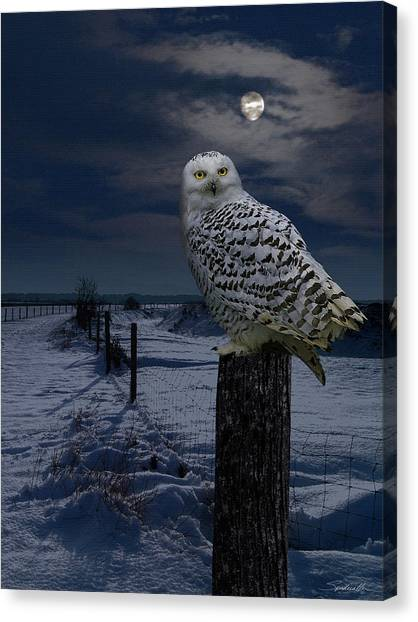Snowy Owl On A Winter Night Canvas Print