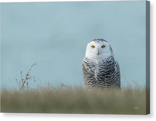 Tundras Canvas Print - Snowy Owl On Blue by Everet Regal