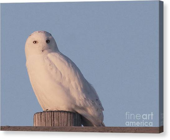 Snowy Owl Canvas Print