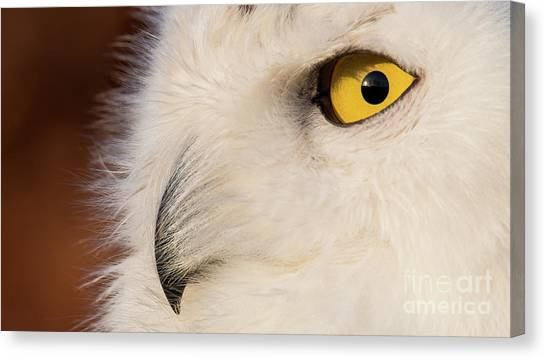 Snowy Owl Portrait Canvas Print