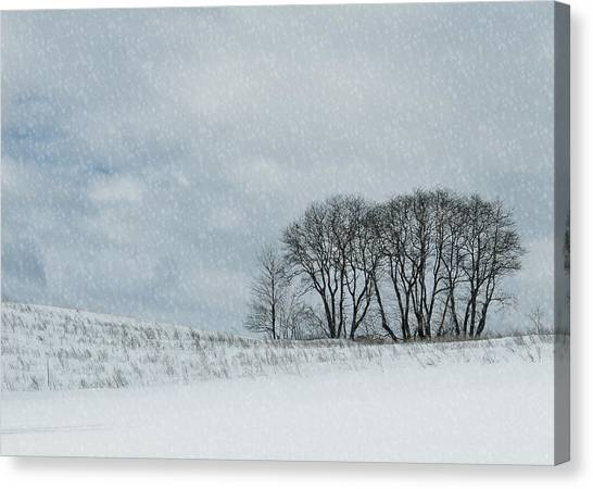 Snowy Pasture Canvas Print by JAMART Photography