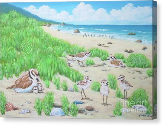Snowy Plover Canvas Print