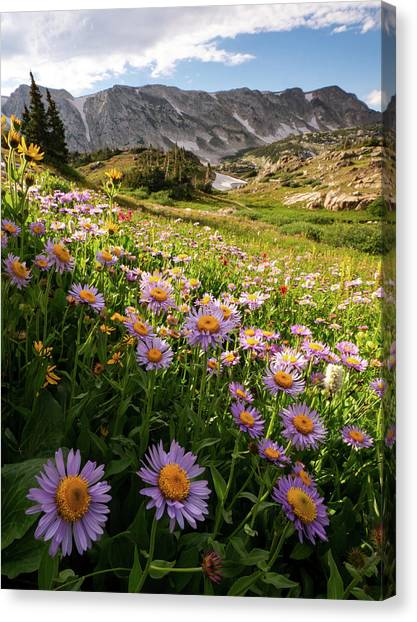 Snowy Range Flowers Canvas Print