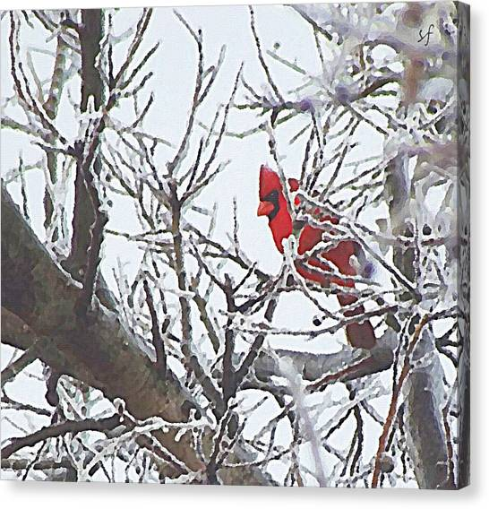 Snowy Red Bird A Cardinal In Winter Canvas Print