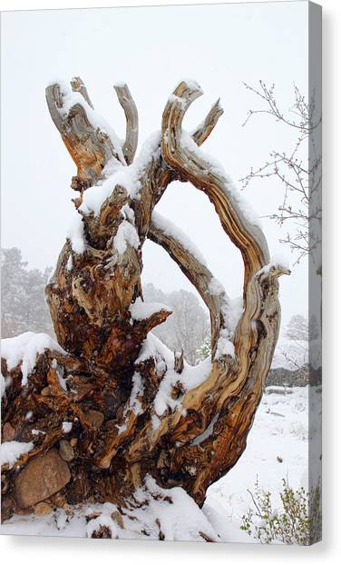 Snowy Roots Canvas Print