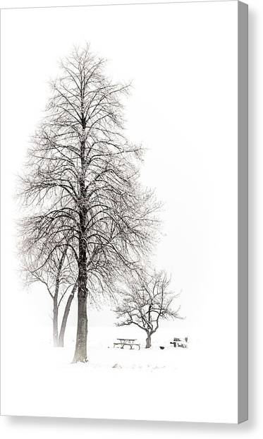 Snowy Trees Canvas Print
