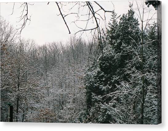 Snowy Woods Canvas Print by C E McConnell