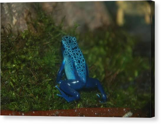 So Blue Canvas Print by HP Hwang